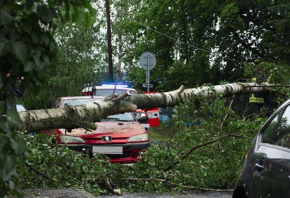 На машину упало дерево ― что делать?